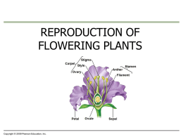3-22-13 Flower PPT - Madison County Schools