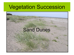 Sand Dune Succession - Clydebank High School