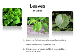 Leaves by Elaine - intelessentials2