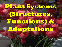 Plant System Notes