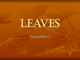 What are the functions of leaves?