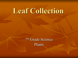 Leaf Collection - Cloudfront.net