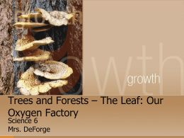 Trees and Forests – The Leaf: Our Oxygen Factory