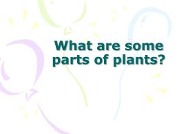 What are some parts of plants?