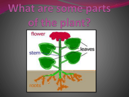 What are some parts of the plant?