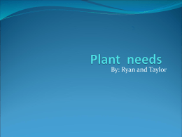 Taylor and Ryan Plants