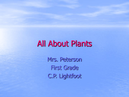 All About Plants - Etiwanda E
