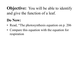 Objective: You will be able to identify and give the function of a leaf.