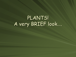 PLANTS! A very BRIEF look….