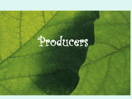 Why are plants producers?