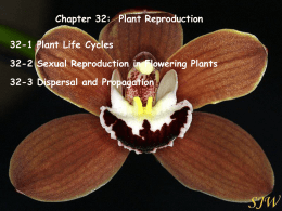 Chapter 32-Plant Reproduction