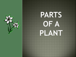 Anticipated Problem: What are the main parts of a plant?