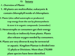 2. Plants (also called autotrophs or producers)