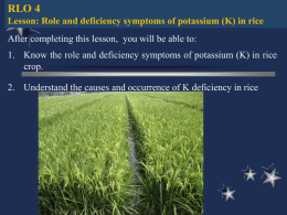 Role and deficiency symptoms of Potassium in Rice