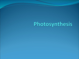 Photosynthesis - MelissaSimpson