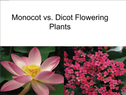 Monocot vs. Dicot Flowering Plants