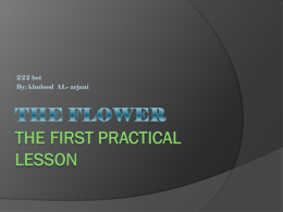 The Flower The first practical lesson