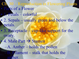 Ch. 27 * Reproduction in Flowering Plants