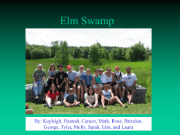 Elm Swamp Historic/Geologic