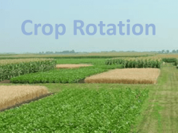 Crop rotation - Science at NESS