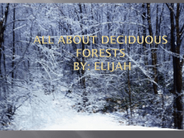 Deciduous forest by Elijah - Mrs. Wade`s 4th Grade Page