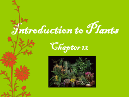 What is a Plant? - St. Clair Schools