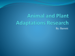 Animal and Plant Adaptations Research