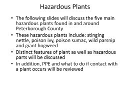 Hazardous Plants Powerpoint