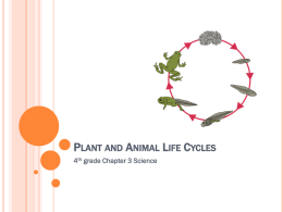 Plant and Animal Life Cycles - Spring