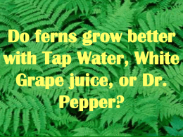 Do ferns grow better with Tap Water, Apple Juice, or Dr. Pepper?