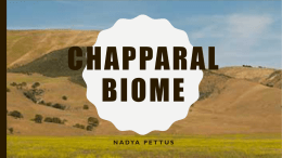 Chapparal Biome