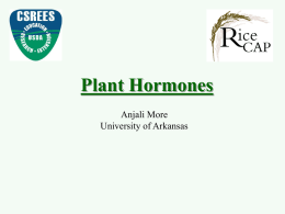 Plant hormones and rice dwarf mutants
