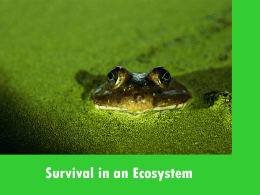 Survival in an Ecosystem