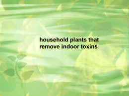 household plants that remove indoor toxins