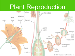 plant_reproduction