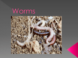 Worms - Latter