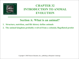 Animal Evolution - Biology Junction