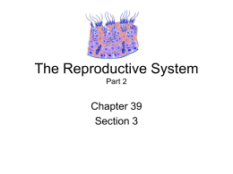 The Reproductive System Part 2