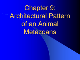 Chapter 10: Architectural Pattern of an Animal
