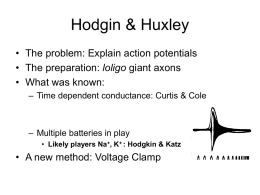 Hodgin & Huxley - Stanford University