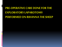 Pre Operative care for Rihanna the Sheep