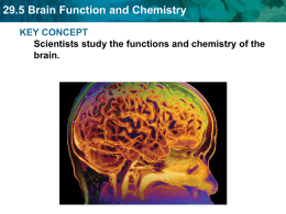 29.5 Brain Function and Chemistry