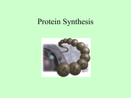 A20-Protein Synthesis