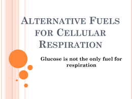 Alternative Fuels for Cellular Respiration