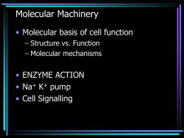 Cellular Mechanisms