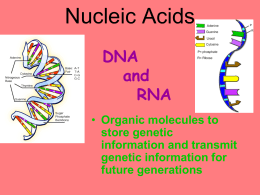 Nucleic Acids DNA & RNA