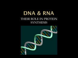 DNA & RNA - East Pennsboro High School