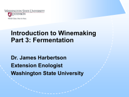 Introduction to Winemaking Part 3: Fermentation