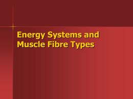 Energy Systems and Muscle Fibre Types