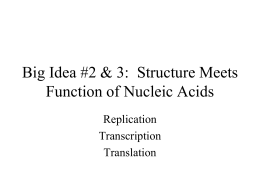 Big Idea #2 & 3: Structure Meets Function of Nucleic Acids
